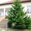 Галерия от село Градсковски колиби